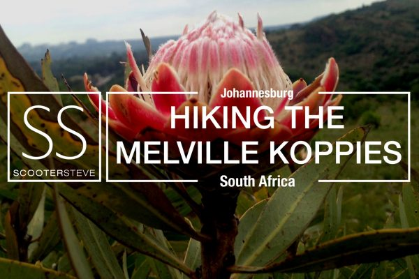 Melville Koppies Nov 2017