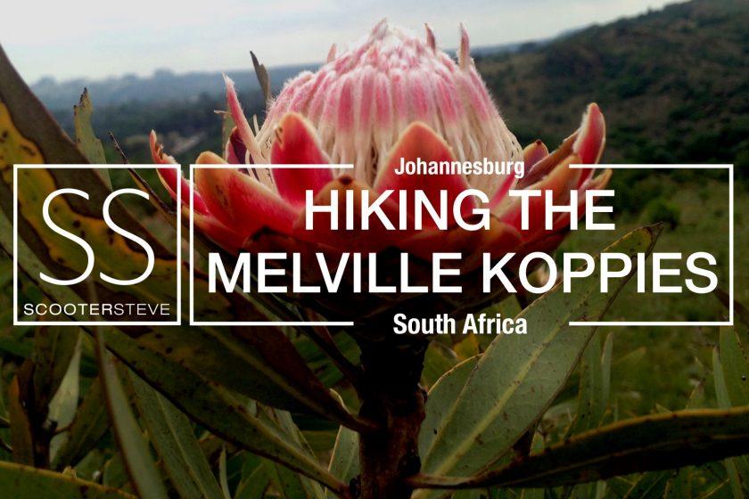Melville Koppies Nov 2017
